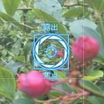 iPhoneは有料カメラアプリがひとつあればマクロ撮影のレベルが上がる